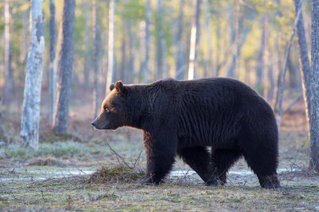 karhu-hannu-huttu